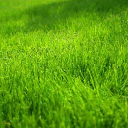 El pasto del vecino es más verde